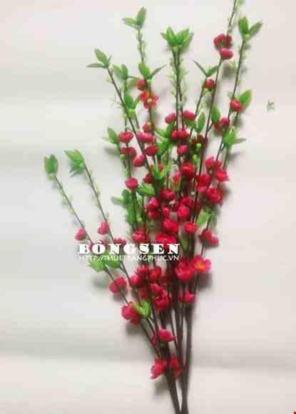 Cho thue Cành hoa đào
