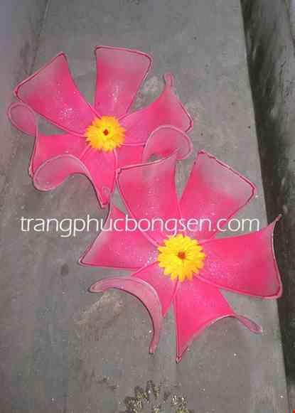 Cho thue Hoa múa cỡ lớn màu hồng cánh cứng