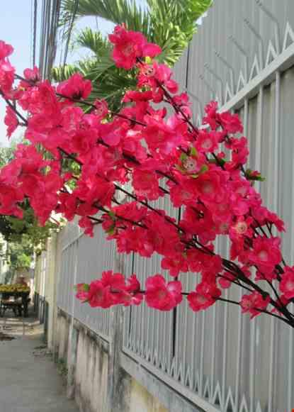 Cho thue Cành hoa đào lớn