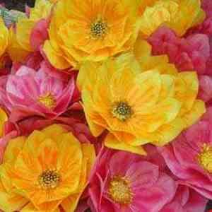 Hình ảnh cho thể loại Hoa múa